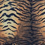 Designer pattern Tiger